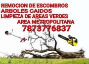 Corte de arboles limpieza de patios en San Juan Puerto Rico